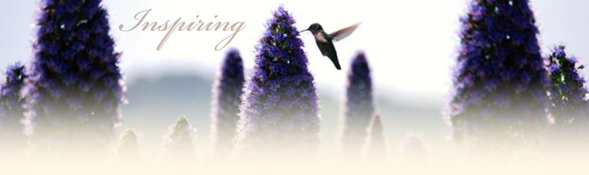 hummingbird pollinating flowers at five sisters ranch