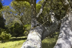 Five-Sisters-Ranch_tree2