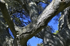 Five-Sisters-Ranch_tree3