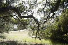 Five-Sisters-Ranch_tree4