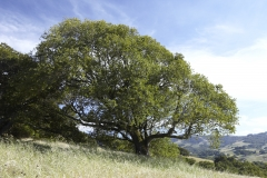 Five-Sisters-Ranch_tree5