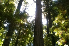 Five-Sisters-Ranch_tree7