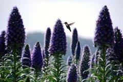 Five-Sisters-Ranch_hummingbird