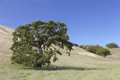 Five-Sisters-Ranch_tree1